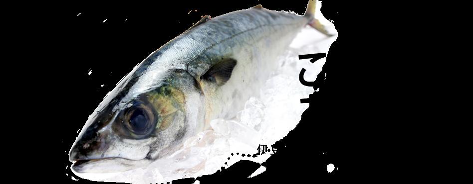 美味い魚がここにある!
