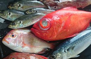 株式会社 魚将